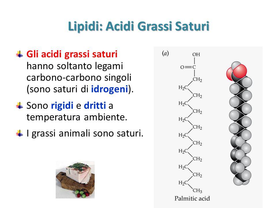 Lipidi: Acidi Grassi Saturi