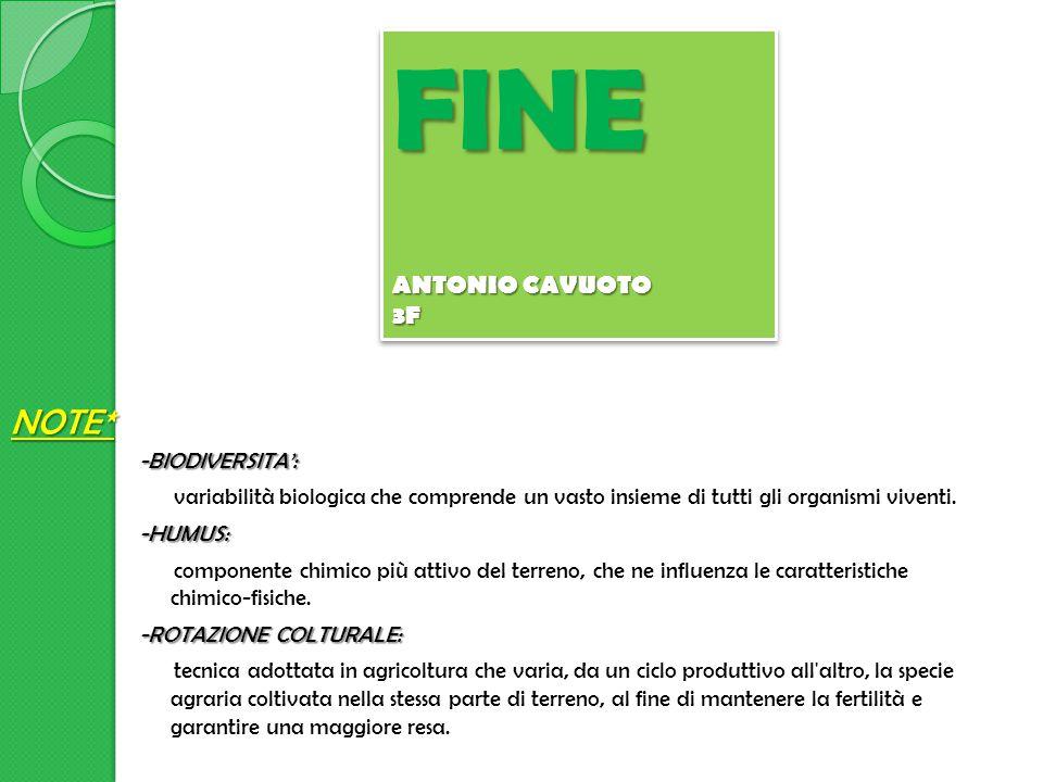 FINE NOTE* ANTONIO CAVUOTO 3F
