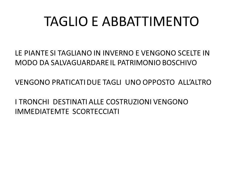 TAGLIO E ABBATTIMENTO LE PIANTE SI TAGLIANO IN INVERNO E VENGONO SCELTE IN MODO DA SALVAGUARDARE IL PATRIMONIO BOSCHIVO.