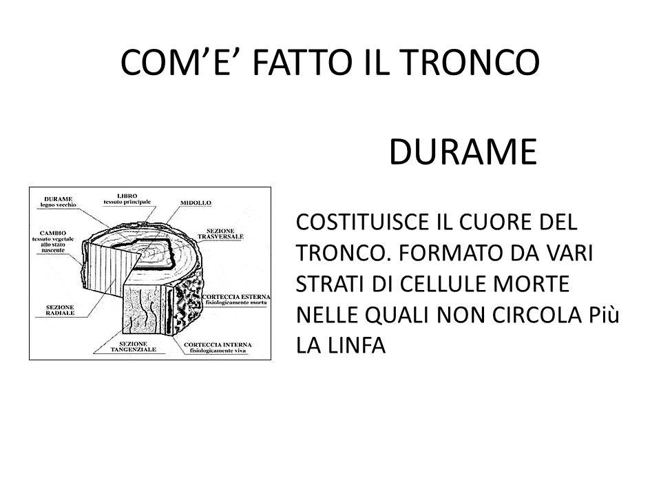 COM'E' FATTO IL TRONCO DURAME