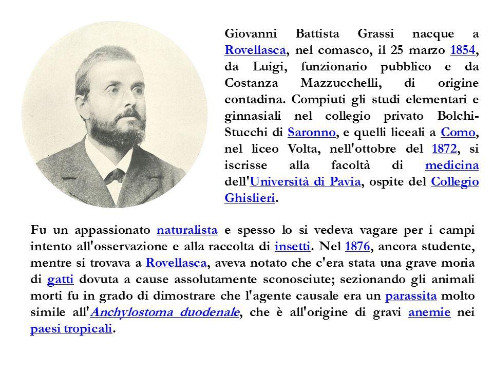 Giovanni Battista Grassi nacque a Rovellasca, nel comasco, il 25 marzo 1854, da Luigi, funzionario pubblico e da Costanza Mazzucchelli, di origine contadina. Compiuti gli studi elementari e ginnasiali nel collegio privato Bolchi-Stucchi di Saronno, e quelli liceali a Como, nel liceo Volta, nell ottobre del 1872, si iscrisse alla facoltà di medicina dell Università di Pavia, ospite del Collegio Ghislieri.