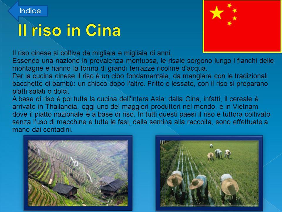 Indice Il riso in Cina.