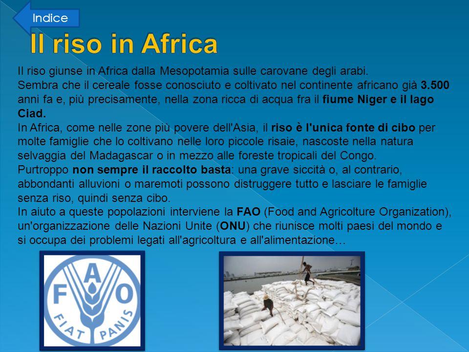 Il riso in Africa Indice