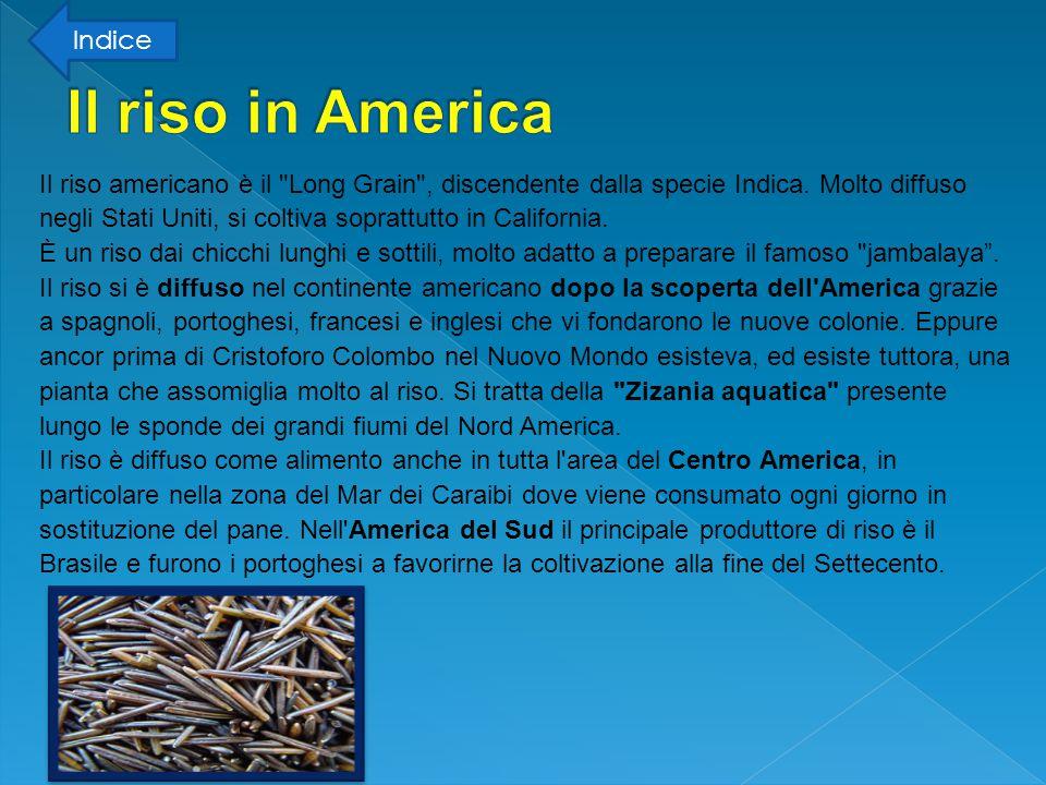 Il riso in America Indice