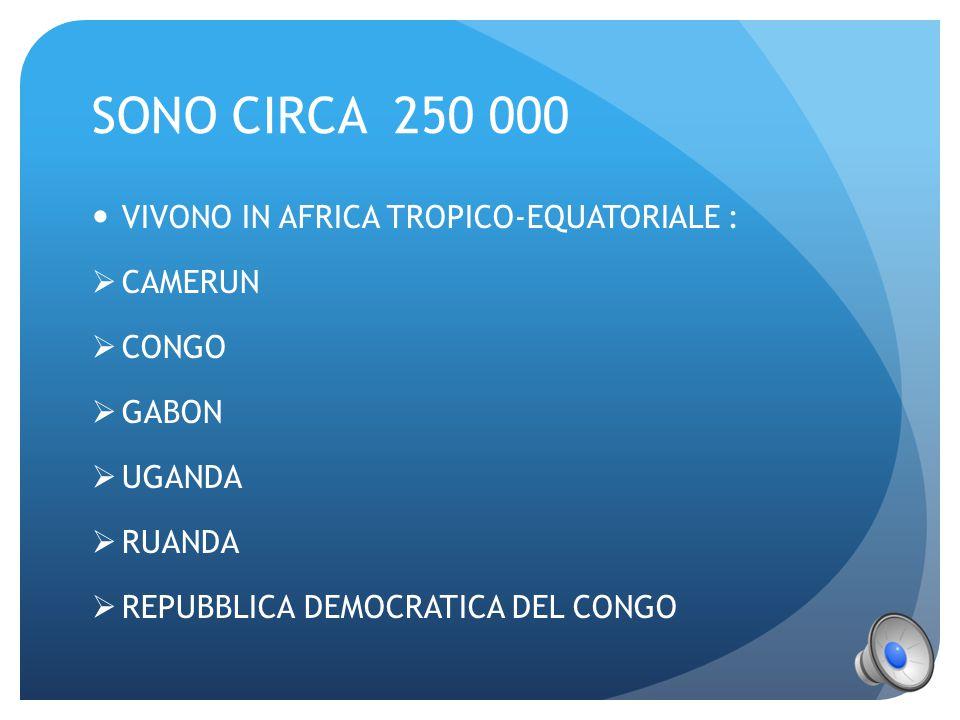 SONO CIRCA 250 000 VIVONO IN AFRICA TROPICO-EQUATORIALE : CAMERUN