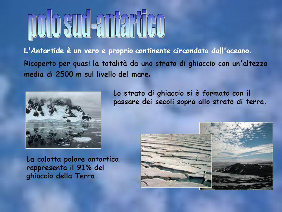 polo sud-antartico L Antartide è un vero e proprio continente circondato dall oceano.
