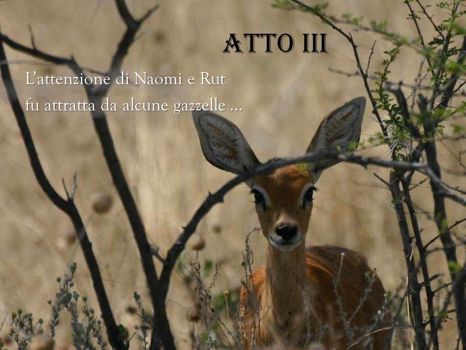 Atto III L'attenzione di Naomi e Rut fu attratta da alcune gazzelle …