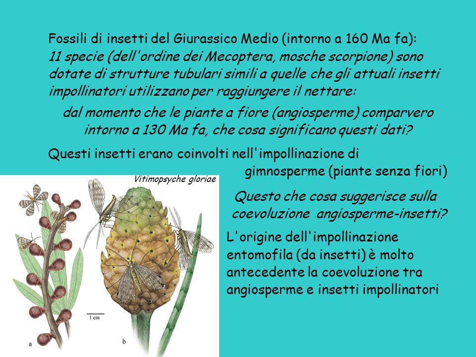 Fossili di insetti del Giurassico Medio (intorno a 160 Ma fa):