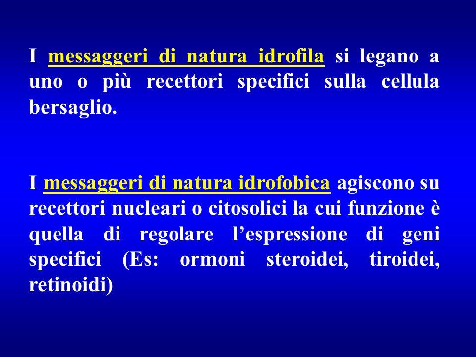 I messaggeri di natura idrofila si legano a uno o più recettori specifici sulla cellula bersaglio.