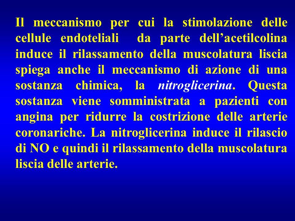 Il meccanismo per cui la stimolazione delle cellule endoteliali da parte dell'acetilcolina induce il rilassamento della muscolatura liscia spiega anche il meccanismo di azione di una sostanza chimica, la nitroglicerina.