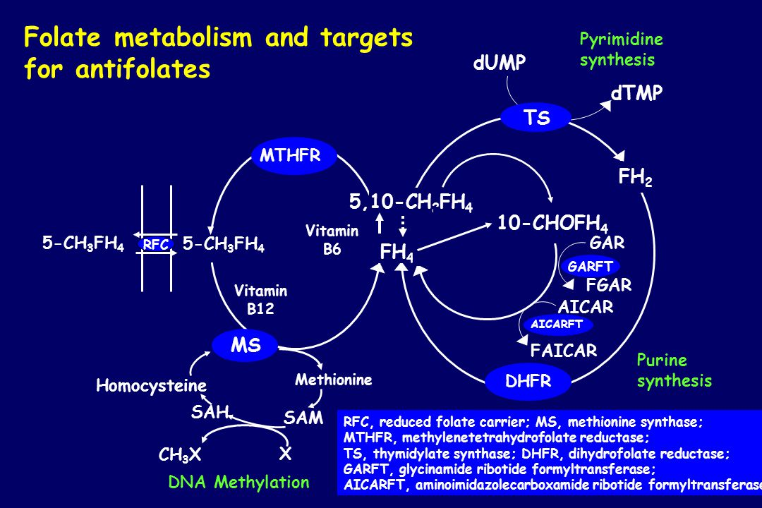 Folate metabolism and targets for antifolates
