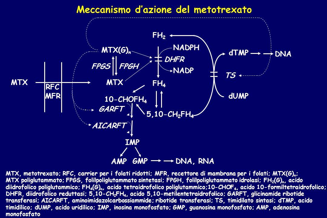 Meccanismo d'azione del metotrexato