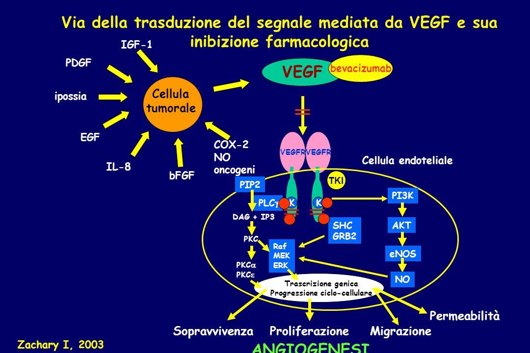Progressione ciclo-cellulare