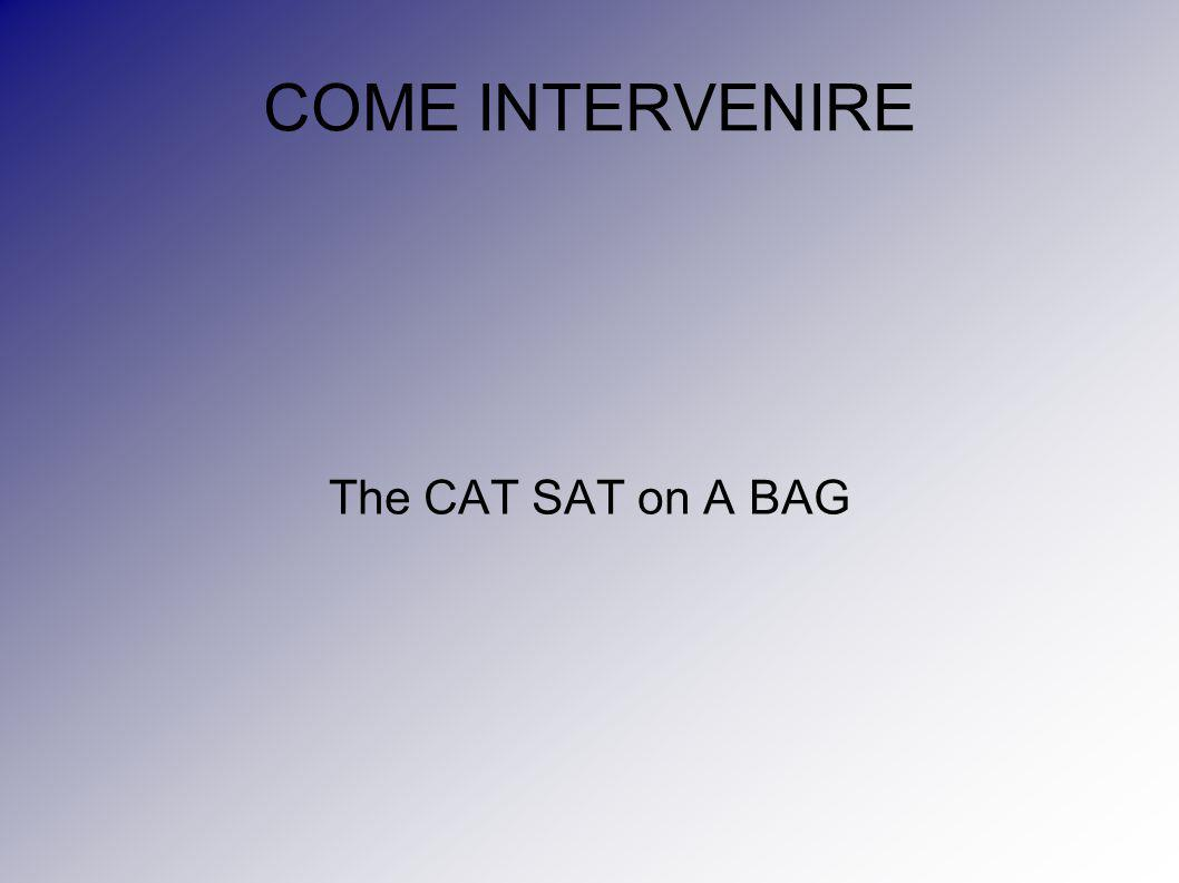 COME INTERVENIRE The CAT SAT on A BAG