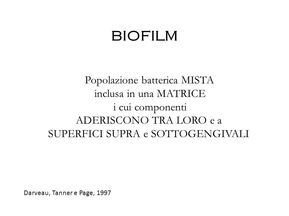 BIOFILM inclusa in una MATRICE i cui componenti