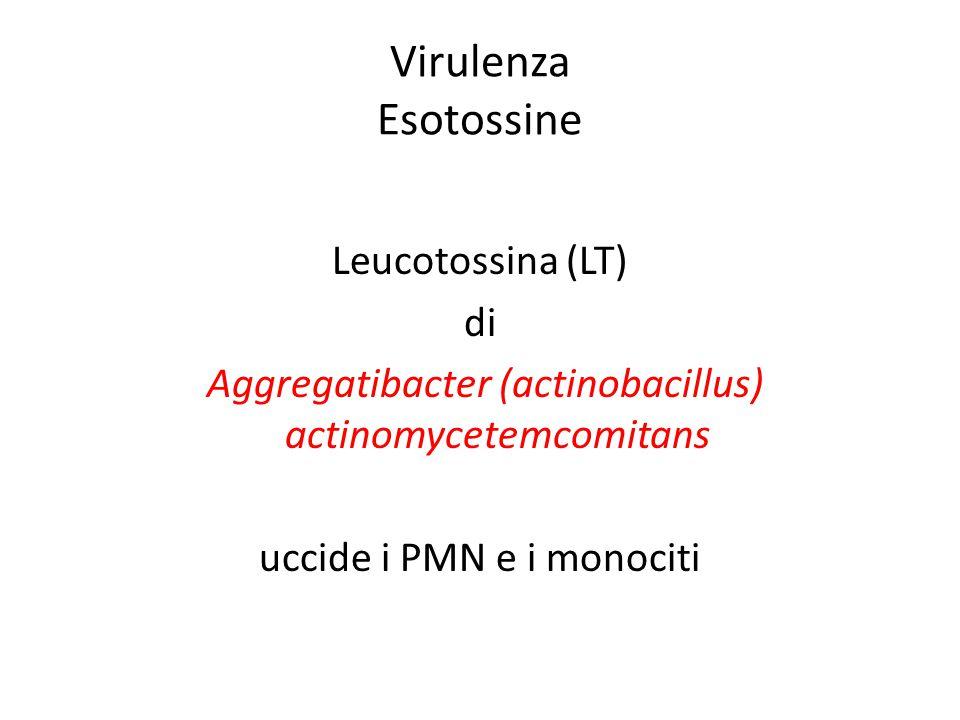 Virulenza Esotossine Leucotossina (LT) di
