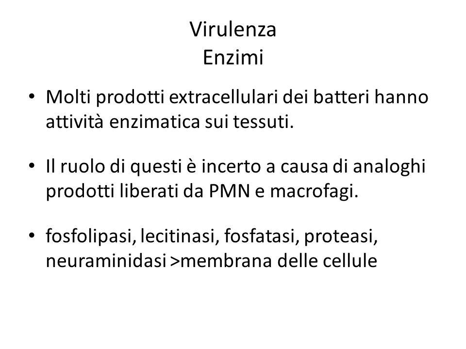 Virulenza Enzimi Molti prodotti extracellulari dei batteri hanno attività enzimatica sui tessuti.