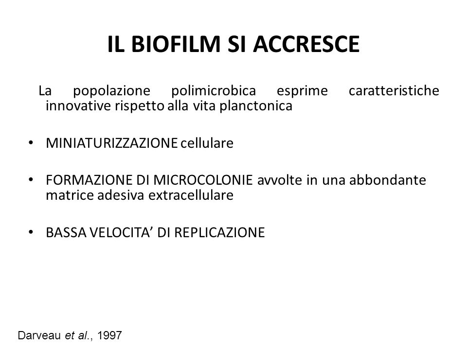 IL BIOFILM SI ACCRESCE La popolazione polimicrobica esprime caratteristiche innovative rispetto alla vita planctonica.