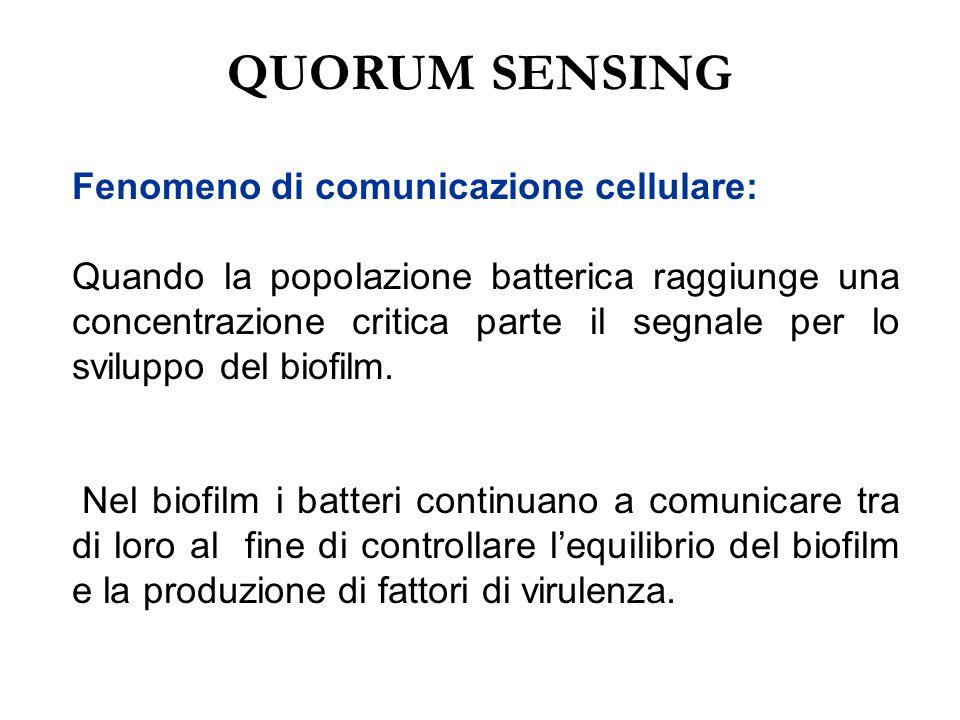 QUORUM SENSING Fenomeno di comunicazione cellulare:
