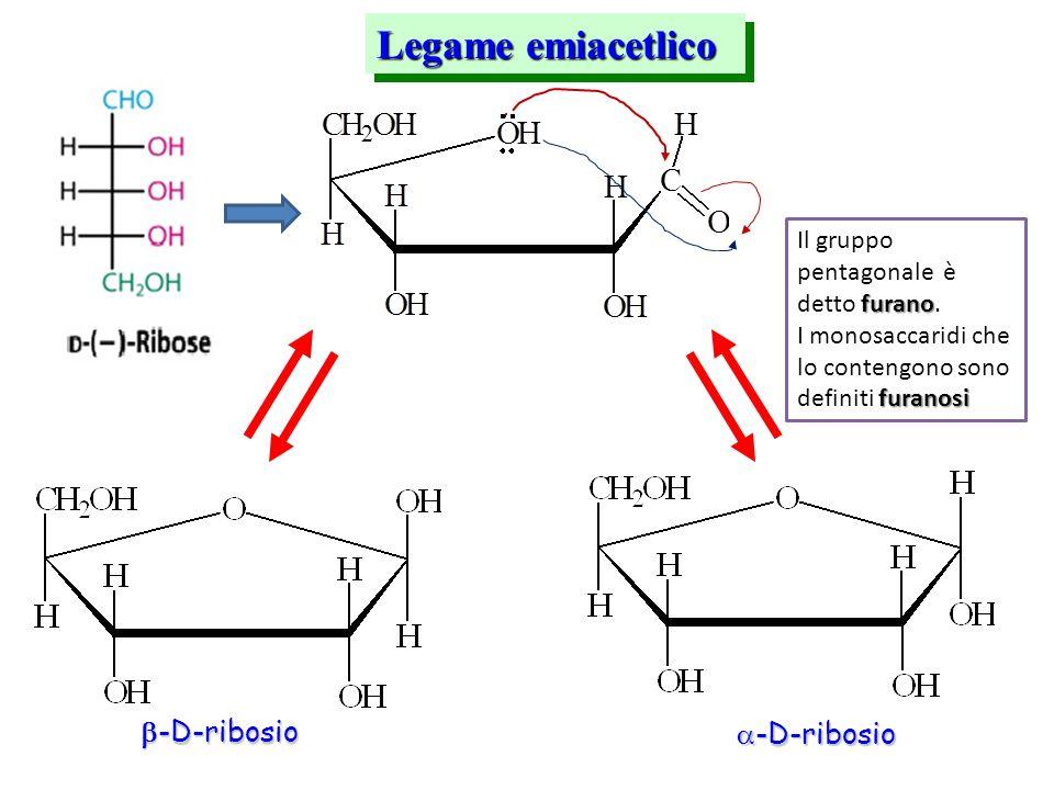 Legame emiacetlico -D-ribosio -D-ribosio