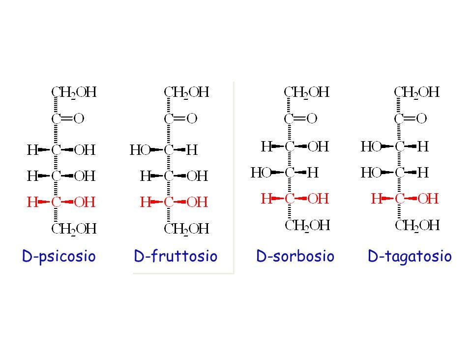 D-psicosio D-fruttosio D-sorbosio D-tagatosio