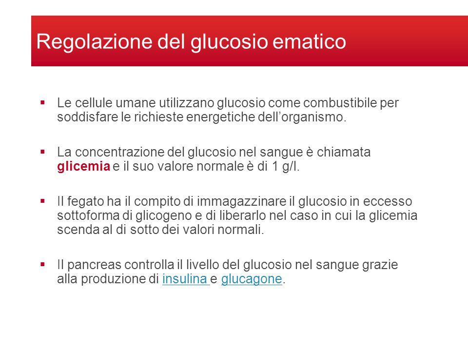 Regolazione del glucosio ematico