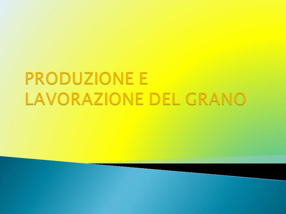 PRODUZIONE E LAVORAZIONE DEL GRANO