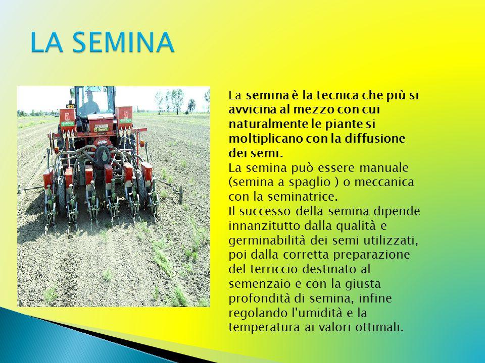 LA SEMINA La semina è la tecnica che più si avvicina al mezzo con cui naturalmente le piante si moltiplicano con la diffusione dei semi.