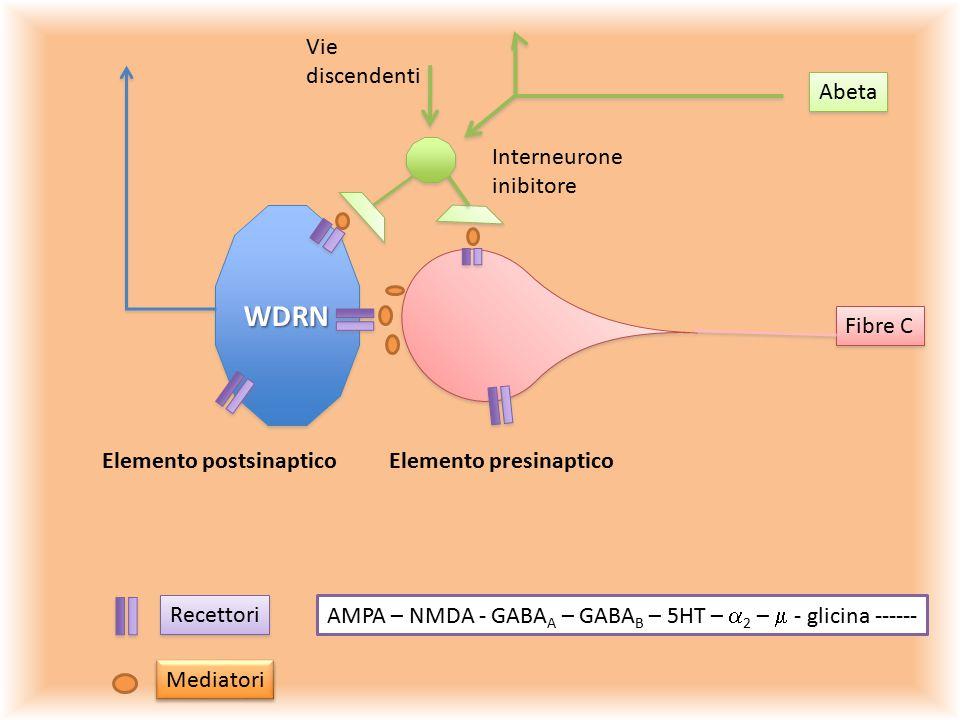 WDRN Vie discendenti Abeta Interneurone inibitore Fibre C