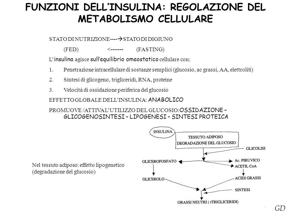 FUNZIONI DELL'INSULINA: REGOLAZIONE DEL METABOLISMO CELLULARE