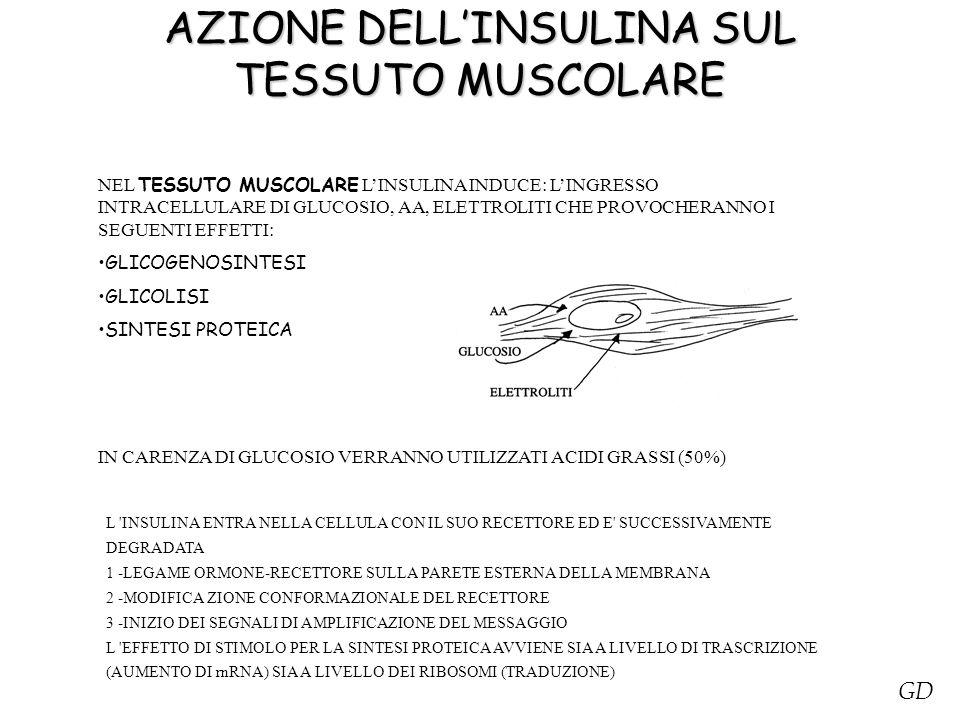AZIONE DELL'INSULINA SUL TESSUTO MUSCOLARE