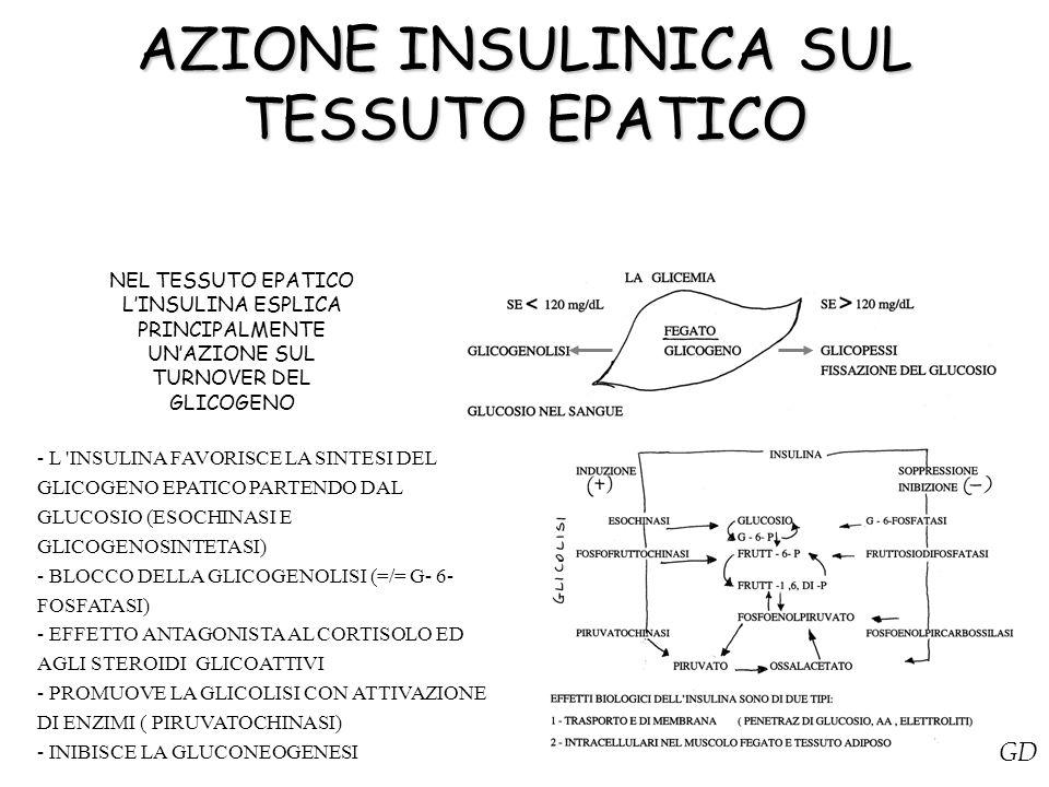 AZIONE INSULINICA SUL TESSUTO EPATICO