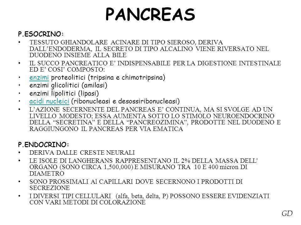 PANCREAS GD P.ESOCRINO: