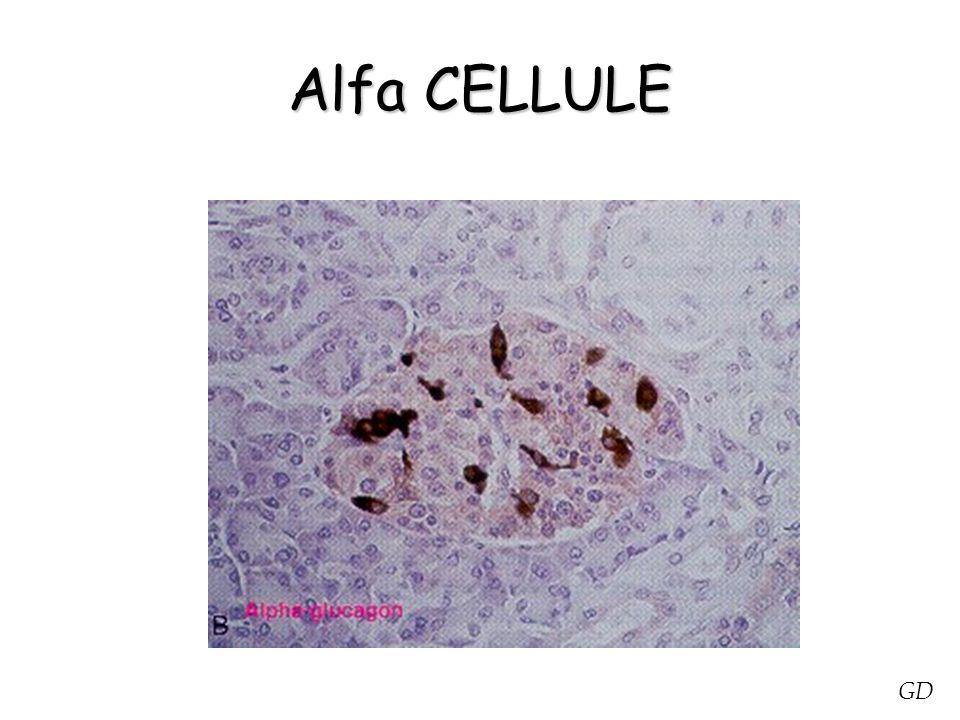 Alfa CELLULE GD