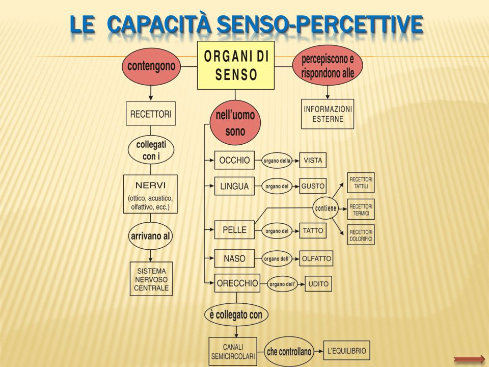 LE Capacità senso-percettive