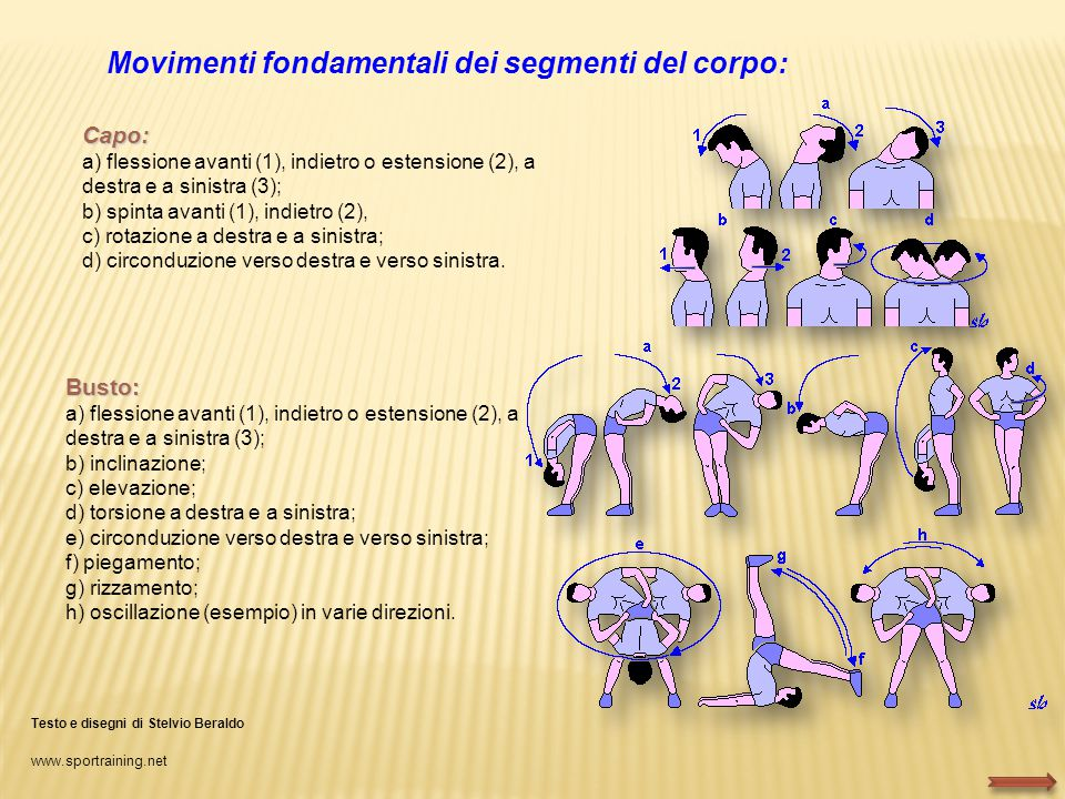 Movimenti fondamentali dei segmenti del corpo: