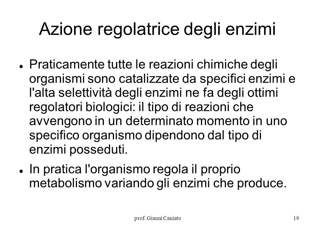 Azione regolatrice degli enzimi