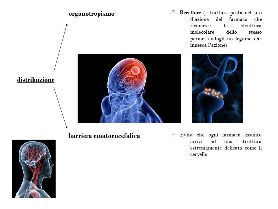 barriera ematoencefalica distribuzione organotropismo