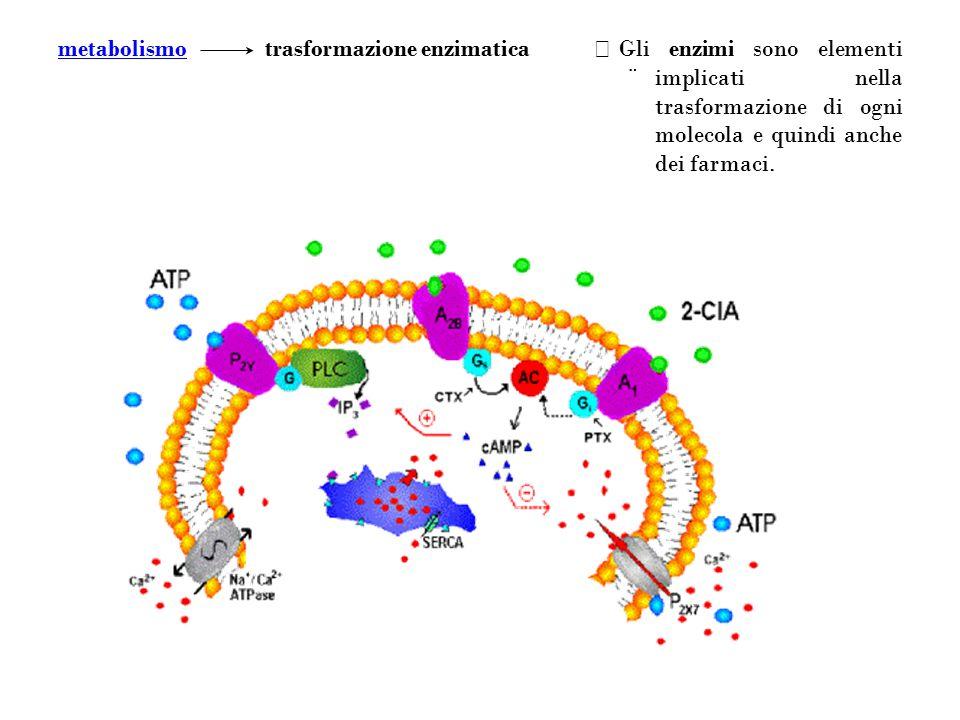 Gli enzimi sono elementi implicati nella trasformazione di ogni molecola e quindi anche dei farmaci.