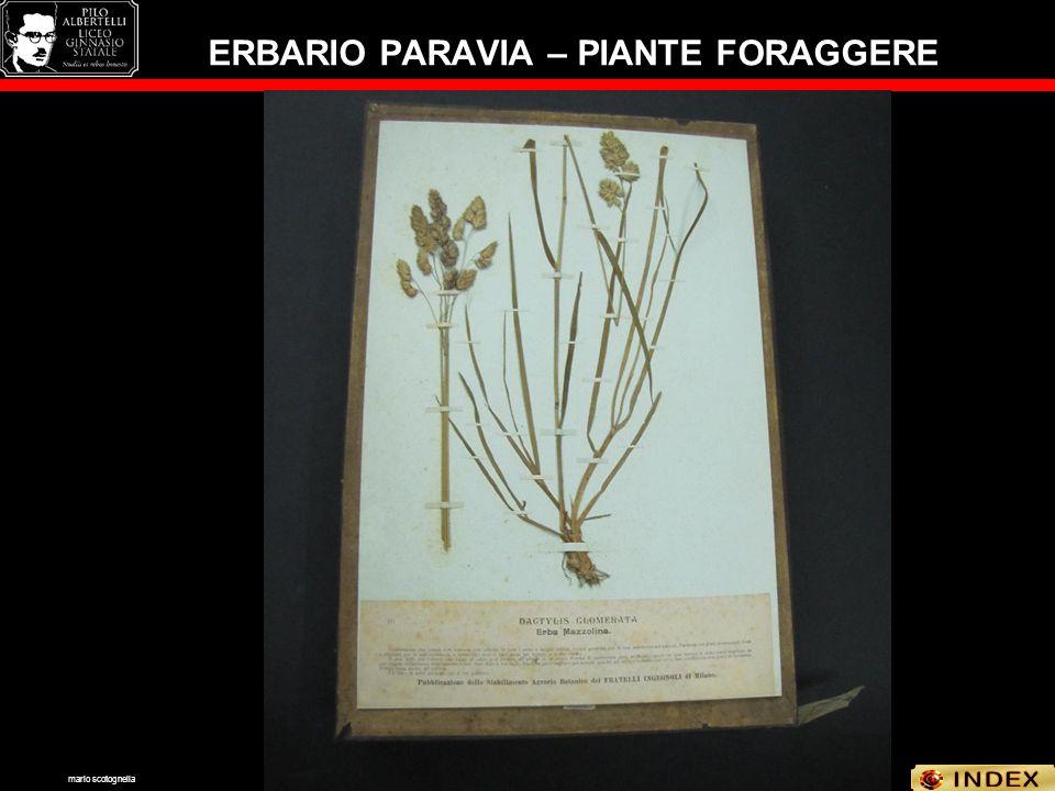 ERBARIO PARAVIA – PIANTE FORAGGERE