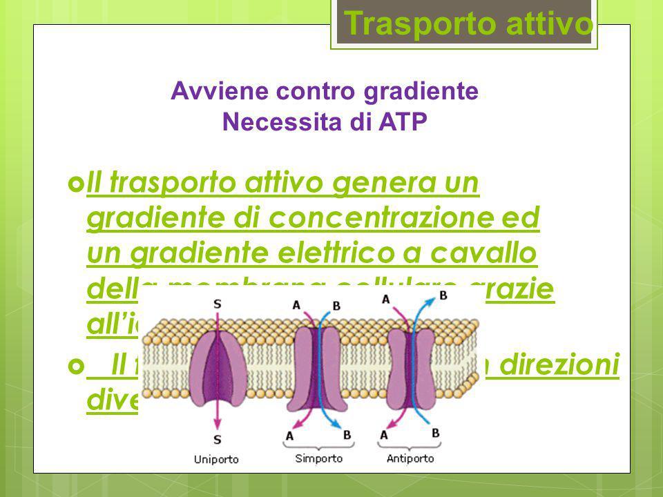 Avviene contro gradiente Necessita di ATP
