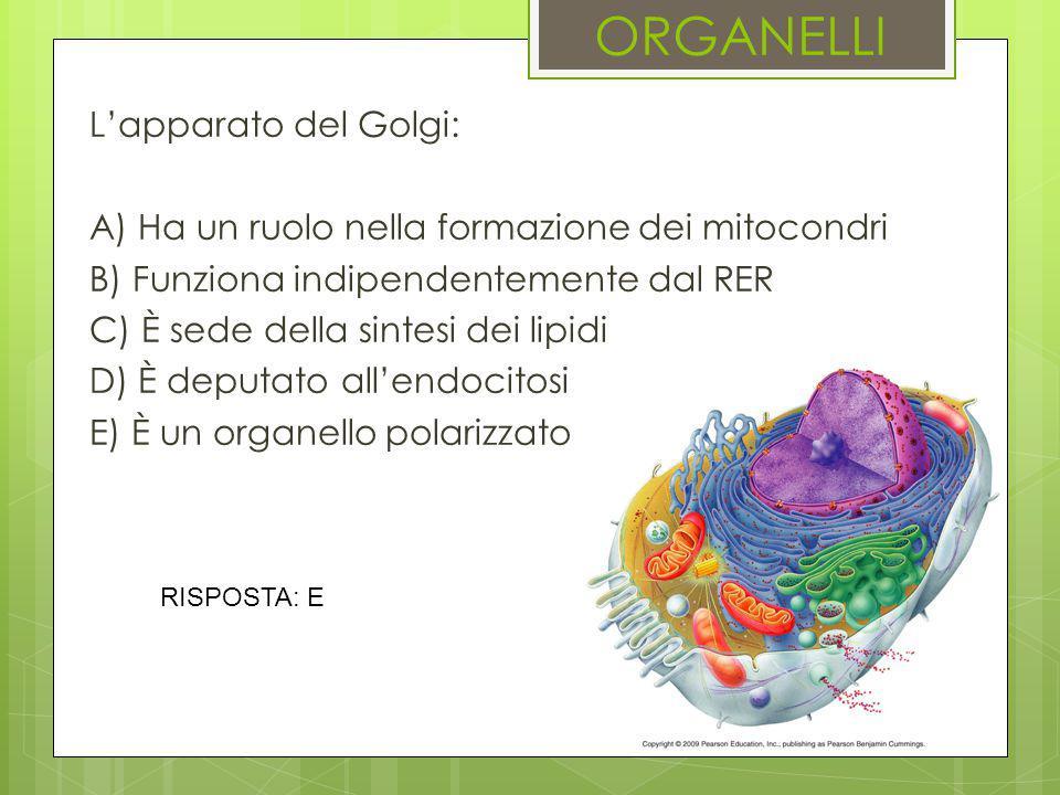 ORGANELLI L'apparato del Golgi: