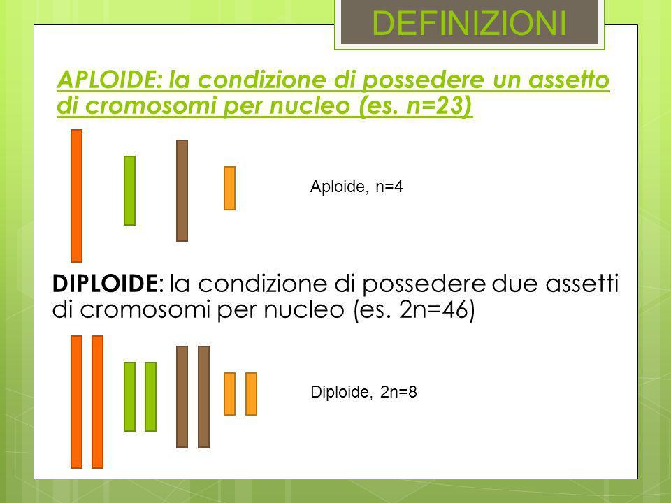 DEFINIZIONI APLOIDE: la condizione di possedere un assetto di cromosomi per nucleo (es. n=23) Aploide, n=4.