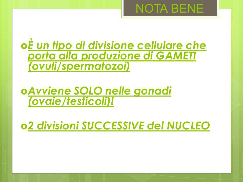 NOTA BENE È un tipo di divisione cellulare che porta alla produzione di GAMETI (ovuli/spermatozoi)
