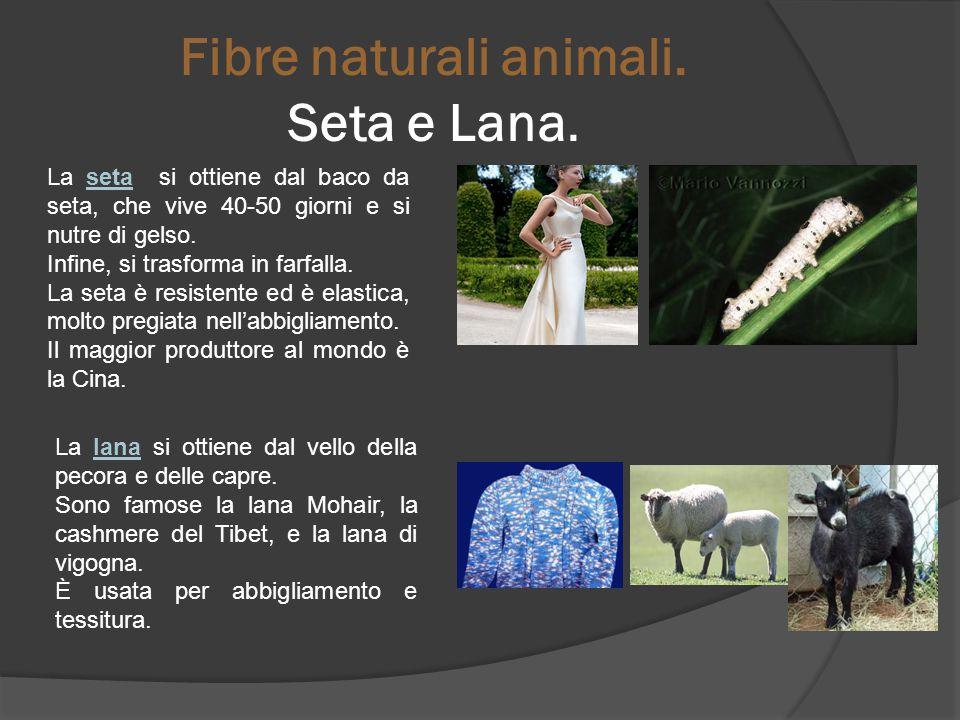 Fibre naturali animali. Seta e Lana.