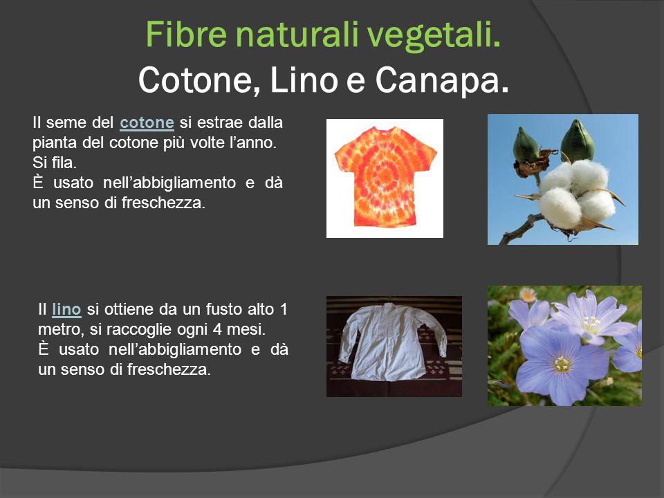 Fibre naturali vegetali. Cotone, Lino e Canapa.