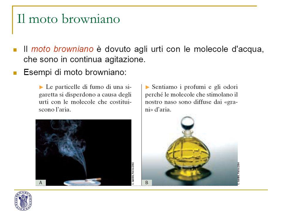 Il moto browniano Il moto browniano è dovuto agli urti con le molecole d acqua, che sono in continua agitazione.