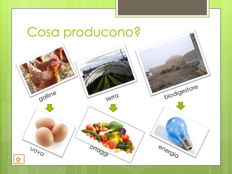 Cosa producono galline biodigestore serra uova energia ortaggi ✪