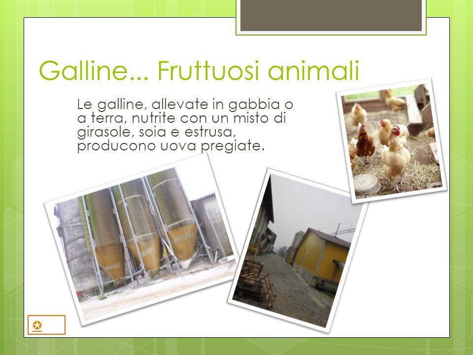 Galline... Fruttuosi animali