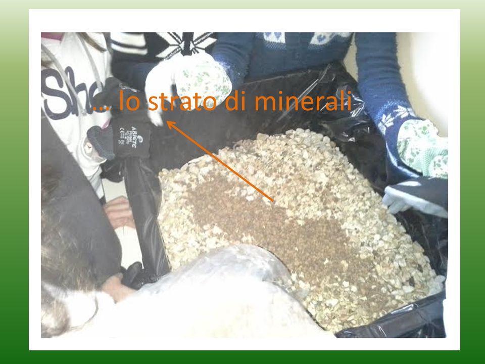 … lo strato di minerali